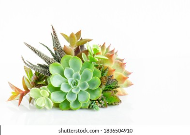 Mini Echeveria succulent plant centerpiece arrangement isolated on white table top background