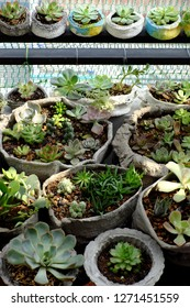 Mini garden at balcony of house, cement pot with cactus or succulent plant make green spaces and fresh environment in decoration home