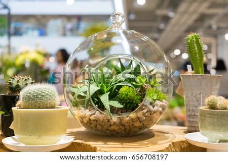 Mini Garden Glass Plant Terrarium Rose Stock Photo Edit Now