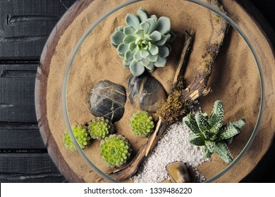 Mini garden home in a glass flask. Cacti, succulents and sand and a piece of wooden snags. The concept of nature and environmental protection, gift.
