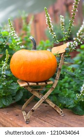Mini garden scene: small big pumpkin on miniature doll shabby chic chair, peppermint plant at background