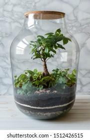 Mini garden (terrarium) with a bonsai tree in a glass vase on a white marble background