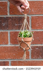 A mini jute twine macrame plant hanger is being held up with a nice red brick background.