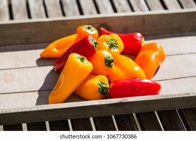 mini paprika mixed colorful