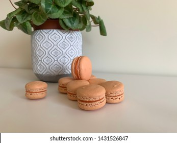 Mini pink french macarons in front of flower pot.