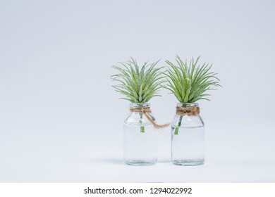 Mini plants with white background