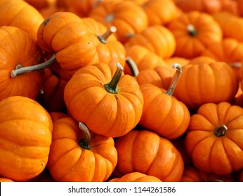 lot of mini pumpkin on the table for market place