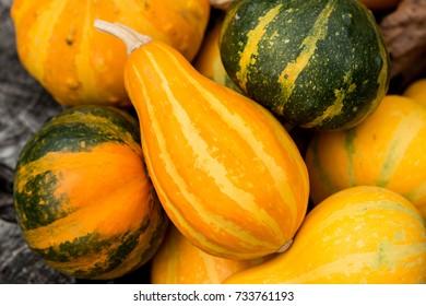 Mini Pumpkins Background