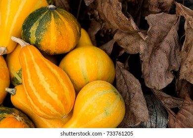 Mini Pumpkins Background. Autumn concept.