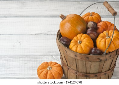 Mini Pumpkins and Chestnuts in Harvest Basket on Rustic White or Gray Board Background with room or space for copy, text.  Horizontal