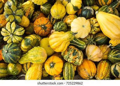 Mini pumpkins in different colors lying on the ground