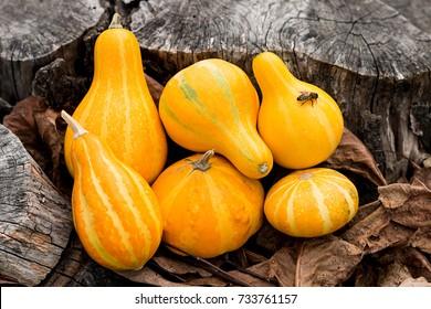 Mini Pumpkins And A Honey Bee