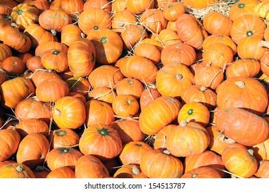 mini pumpkins at market place
