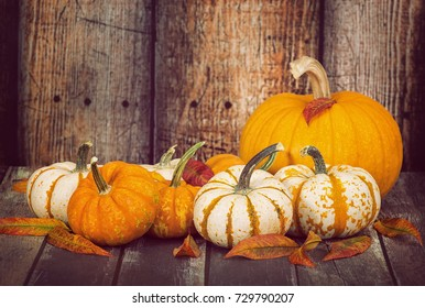 Mini pumpkins and a sugar pie pumpkin with autumn leaves against rustic wooden background, copy space
