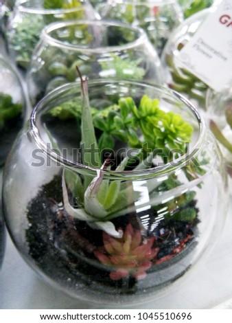 Mini Small Plants Succulent On Terrarium Stock Photo Edit Now