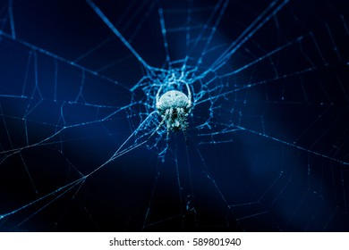 Mini Spider on cobweb