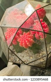 mini succulent garden in glass terrarium, close up of florarium