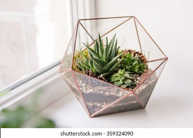 Terrarium Images Stock Photos Vectors Shutterstock