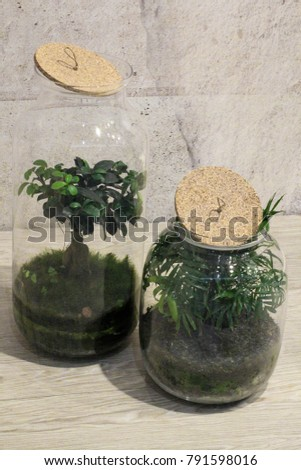 Mini Succulent Garden Glass Terrarium Plants Stock Photo Edit Now