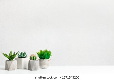 Mini succulent and grassy plants over grey wall with copy space