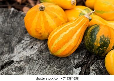 Mini Thanksgiving Pumpkins