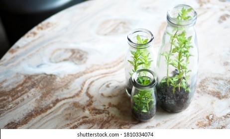 mini-arbre dans une bouteille en verre recycler le concept vert plante environnementale