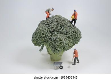 the mini worker planting a broccoli tree