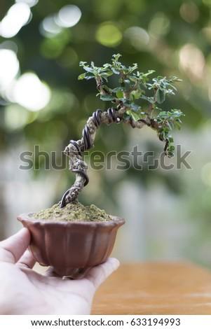 Miniature Bonsai Tree On White Natural Stock Photo Edit Now