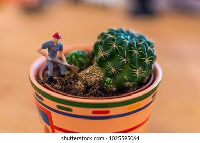 Miniature cactus gardener