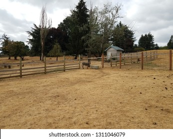 miniature donkey in enclosure with poop and brown grass