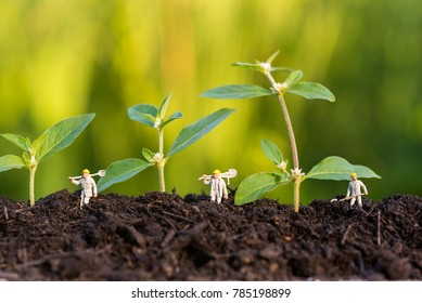 miniature farmer take care growning sprout in field