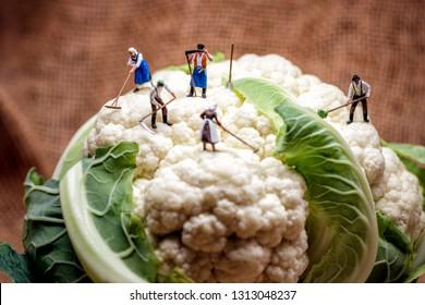 Miniature farmers and Cauliflower head.