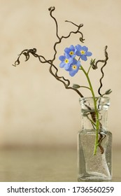 Miniature flower arrangement using Forget Me Nots and creeper tendrils on a neutral backdrop.