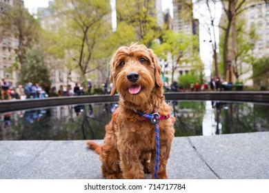 Parkdoodles Stock Photos Images Photography Shutterstock