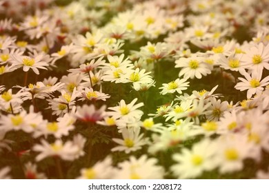 Miniature ground cover flowers rendered in two toned of orange and green.