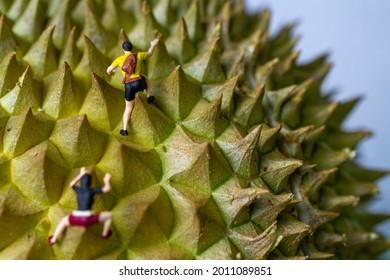 Miniature hikers, hiking up a durian fruit