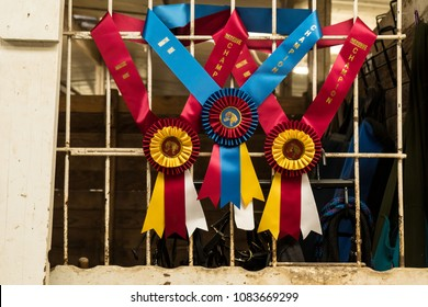 Miniature Horse Awards Ribbons Hanging on Stable Window.