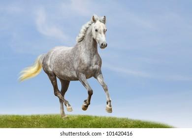 miniature horse in field