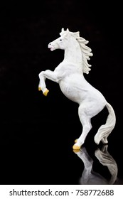 miniature horse: White horse lifts two legs on a black background. Using as battle to win, business concept