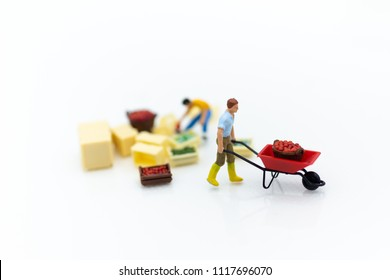 Miniature people : Gardeners harvesting of agricultural crops. Image use for transportation, logistic , supply chain concept