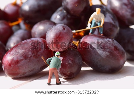 Miniature people picking red grapes.