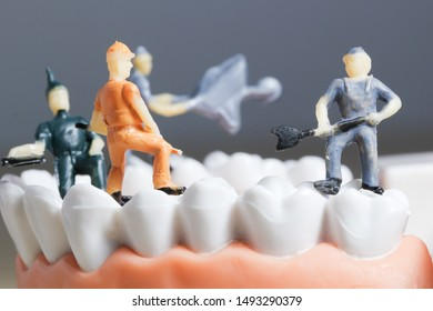 Miniature people or small figure worker cleaning tooth model as medical and healthcare concept. Cleaning team work on teeth model for dental or dentist idea