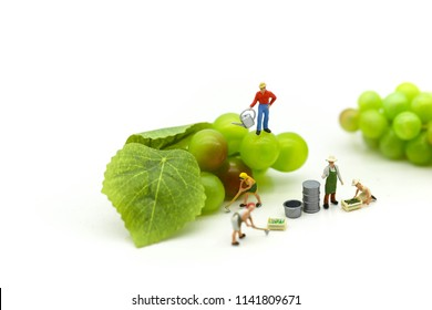 Miniature people : team farmer work with fruit concept agriculture