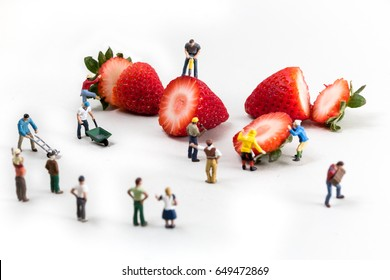 Miniature people working around food, strawberry field