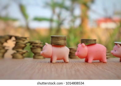 Miniature pigs help carry increasing roll of gold money on wood table in blur roll of money in blurred natural tree