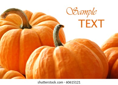 Miniature pumpkins on white background with copy space.  Macro with shallow dof.