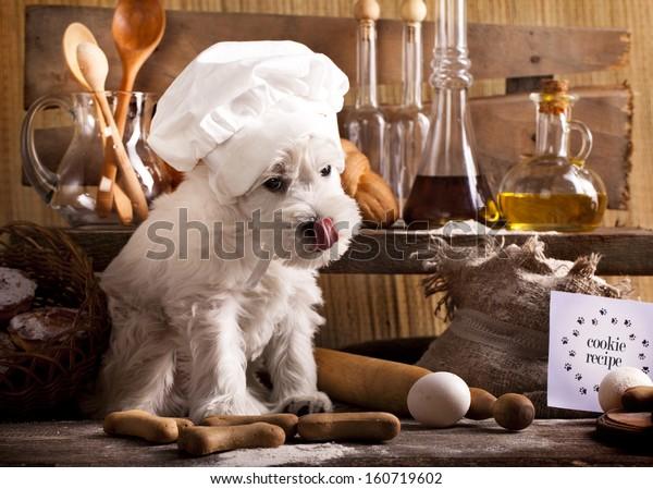 Miniature Schnauzer  in chef's hat, cook puppies
