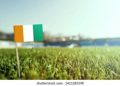 Miniature stick Cote D'Ivoire flag on green grass, close up sunny field. Stadium background, copy space for text.