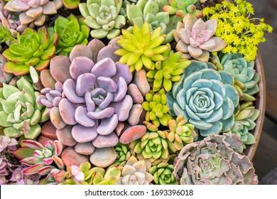 Miniature succulent plants in a planter