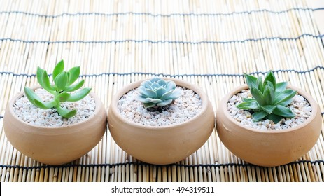 Miniature succulent plants in pot with space for text.